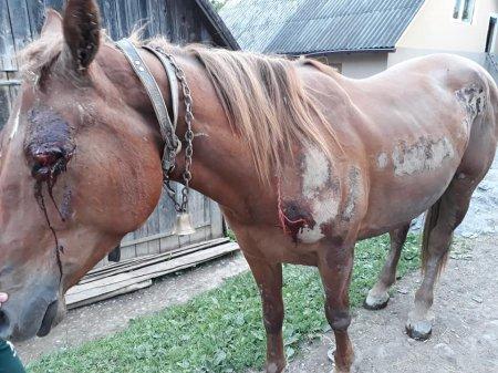 Нечувана жорстокіст: На Рахівщині п'яний екс-помічник лісничого тягав прив'язаного до УАЗу коня по асфальту (ФОТО)