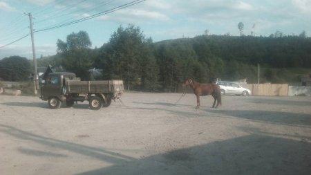 Нелюд який познущався над конем на Рахівщині, прокоментував свій вчинок (ФОТО)