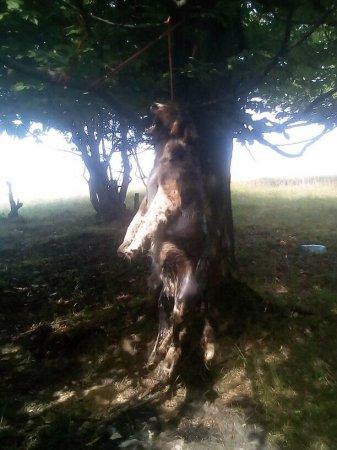 На Тячівщині якийсь нелюд повісив собаку на дереві (фото+18)