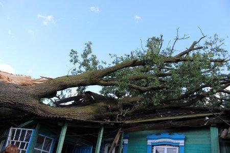 Негода в Ужгороді: на житловий будинок впало величезне дерево
