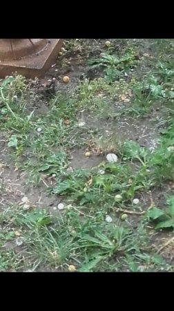 В Ужгороді випав град більший за флешку (фото)