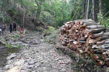 Москаль: «Лісова галузь Закарпаття стала заручником брудних міжусобиць, у які втягують центральні телеканали»