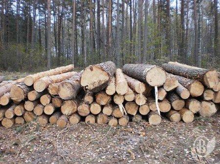 Поліцейські Закарпаття розслідують незаконну порубку лісу