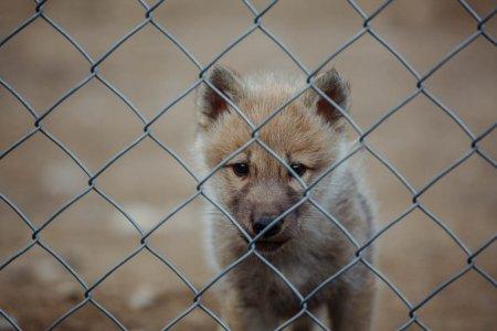 На Міжгірщині, дорогою до озера Синевир, запрацював міні-звіринець, в якому мешкають вовки
