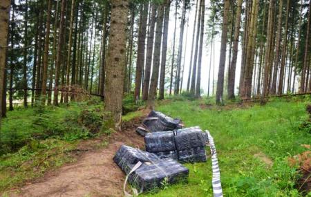 На кордоні Закарпаття та Румунії знову стріляли (фото)