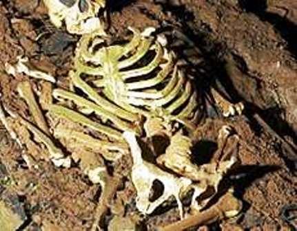 На Воловеччині знайдено скелет людини?