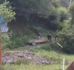 Помер кінь, над яким нелюди познущалися у селі на Закарпатті