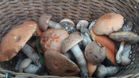 На Закарпатті з'явилися перші осінні гриби (відео)