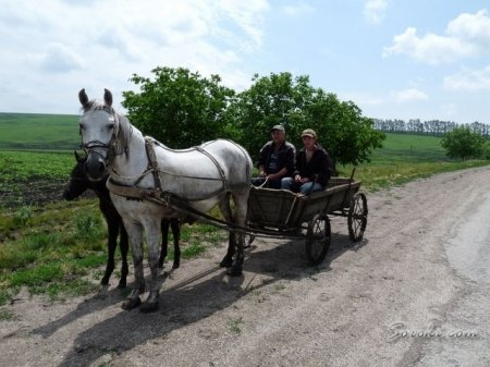 Замість автобусів – коні: чому три села на Березнянщині на місяць  залишилися без транспортного сполучення