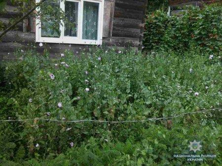 У закарпатського дідуся виявили 194 посіви снодійного маку (фото)