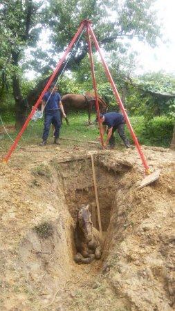 На Закарпатті кінь впав у яму — визволяли рятувальники (ФОТО)