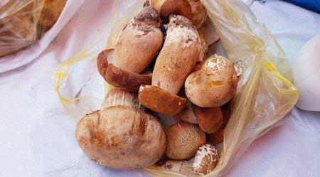 Грибний бум на Закарпатті - ціна на білі гриби цьогоріч дешевша ніж минулий