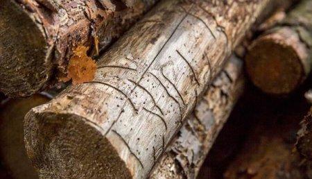 Мінприроди хоче відновити перевірки лісових рубок