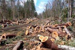 У селі Зарічне (Городилово) на Хустщині варварські рубки дерев: Місцеве населення готується бунтувати