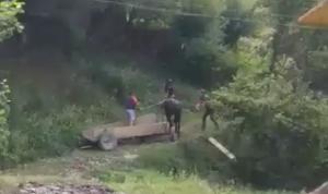 За жорстоке поводження з конем, що призвело до його загибелі, судитимуть закарпатця (ФОТО)