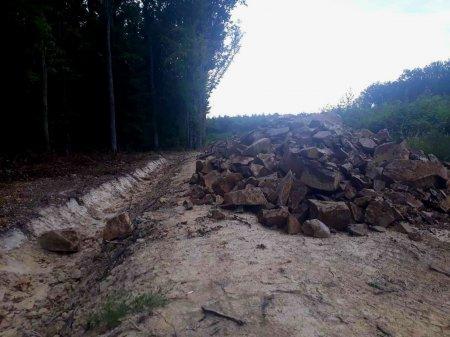 У лісі на Берегівщині прокладають нову дорогу (ВІДЕО)
