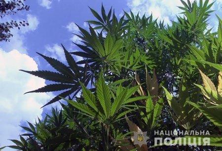 Суд обрав міру запобіжного заходу чоловіку, який підозрюється у масштабному посіві наркотичних рослин