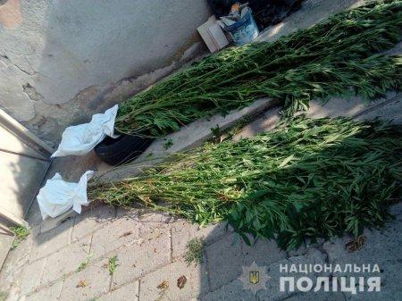 Правоохоронці викрили мукачівця, який насіяв та вирощував 25 кущів коноплі (ФОТО)