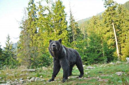 Закарпатський фотограф поділився враженнями від зустрічі з ведмедем (ФОТО)