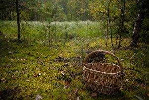 Чоловіка, що пішов по гриби у ліс на Закарпатті і не повернувся, знайшли мертвим