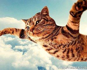 На чоловіка впав з балкону 6-кілограмовий кіт
