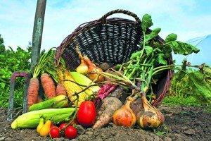 Урожай-2018: На Закарпатті яблук вродило нівроку, зате картоплі й овочам спека трохи зашкодила