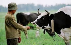 У смерті пастуха з Виноградівщини підозрюють 58-річного місцевого жителя
