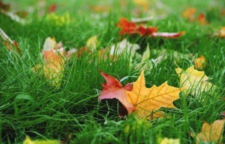 Якщо 10 вересня падав дощ, то....: народні прикмети