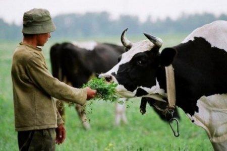 Убив чоловіка за корову: На Закарпатті сварка селян закінчилася смертю
