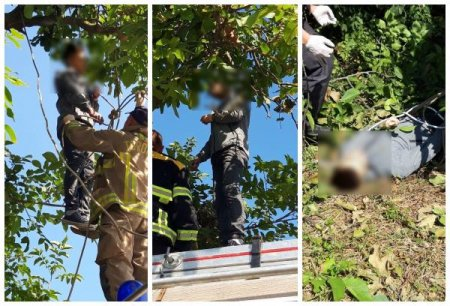 На одній із вулиць  Ужгорода на дереві повісився 21- річний хлопець (ФОТО)