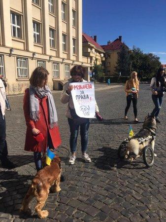 """""""Мене вбила твоя жорстокість """":Сотня закарпатців вийшла на марш за права тварин (фото)"""