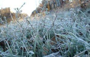 Буде зимно: На Закарпатті кілька днів триматимуться заморозки