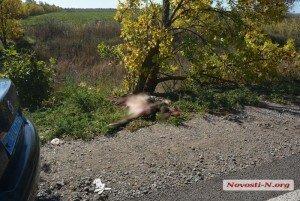 Частини тіла розкидало по всій дорозі: Mercedes на євробляхах збив пішохода (ФОТО)