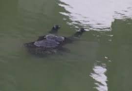 На Закарпатті в річці знайшли тіло мертвої жінки