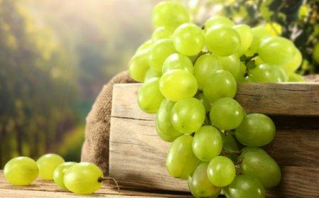 На міжнародному інвестиційному форумі «Закарпаття – бізнес в центрі Європи» обговорять перспективи виноробства