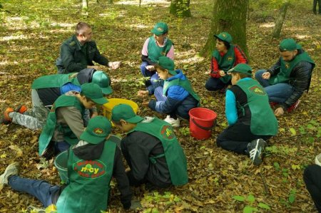 Навіщо берегівські лісівники збирали жолуді?
