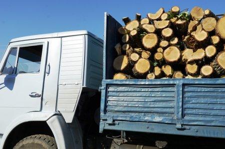 Журналісти дізналися чи легально возять дрова на Берегівщині (ВІДЕО)