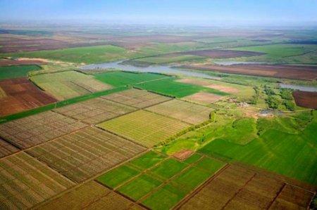 Протягом року за право оренди землі переможці торгів сплатили до місцевих бюджетів Закарпаття майже 1,3 млн грн