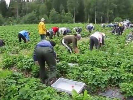 Закарпатським заробітчанам прийдеться сплачувати податки (фото)