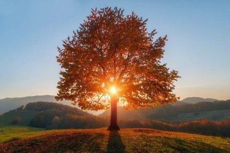 Тепла сонячна погода протримається на Закарпатті ще чотири дні