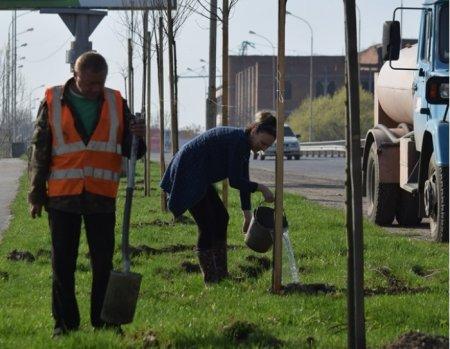 В Ужгороді висадять нові дерева (ВІДЕО)