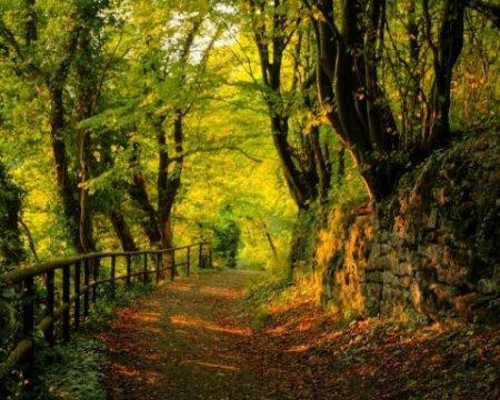 «Чорні лісоруби» на Закарпатті накрали лісу на півмільйона (ВІДЕО)