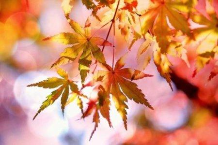 18 жовтня: що потрібно зробити в цей день