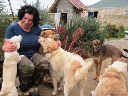Закарпатка продала квартиру заради притулку для травмованих собак (ВІДЕО)