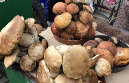 Скільки коштують білі гриби на закарпатських ринках? (ФОТО)