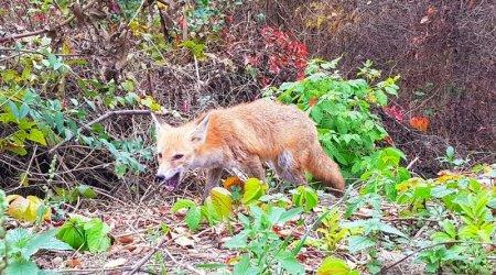 В Ужгороді дика лисиця їсть із рук людей