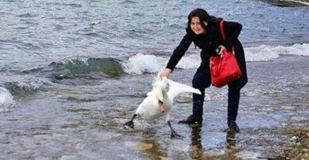 Заради Селфі вона витягла з озера лебедя. Наслідки її вчинку жаxливі…