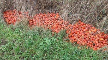 Закарпатці не знають, що робити з врожаєм і викидають його (фото)
