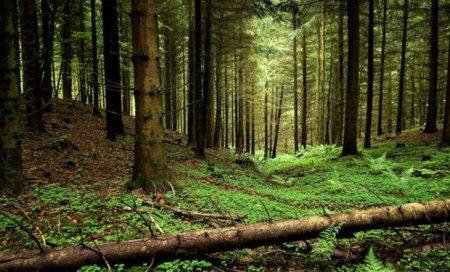 Задля збереження біологічного і ландшафтного різноманіття, природних екосистем Закарпатської області