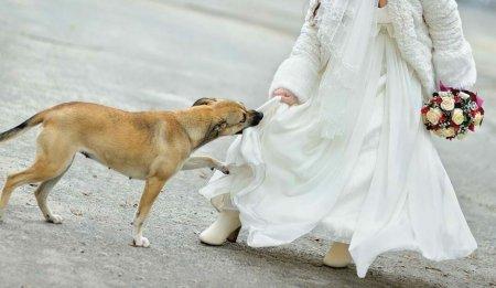 На весіллі тільки пес зрозумів, що вона щось ховає під сукнею